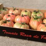 Tomate rosa de Falces Maia 5